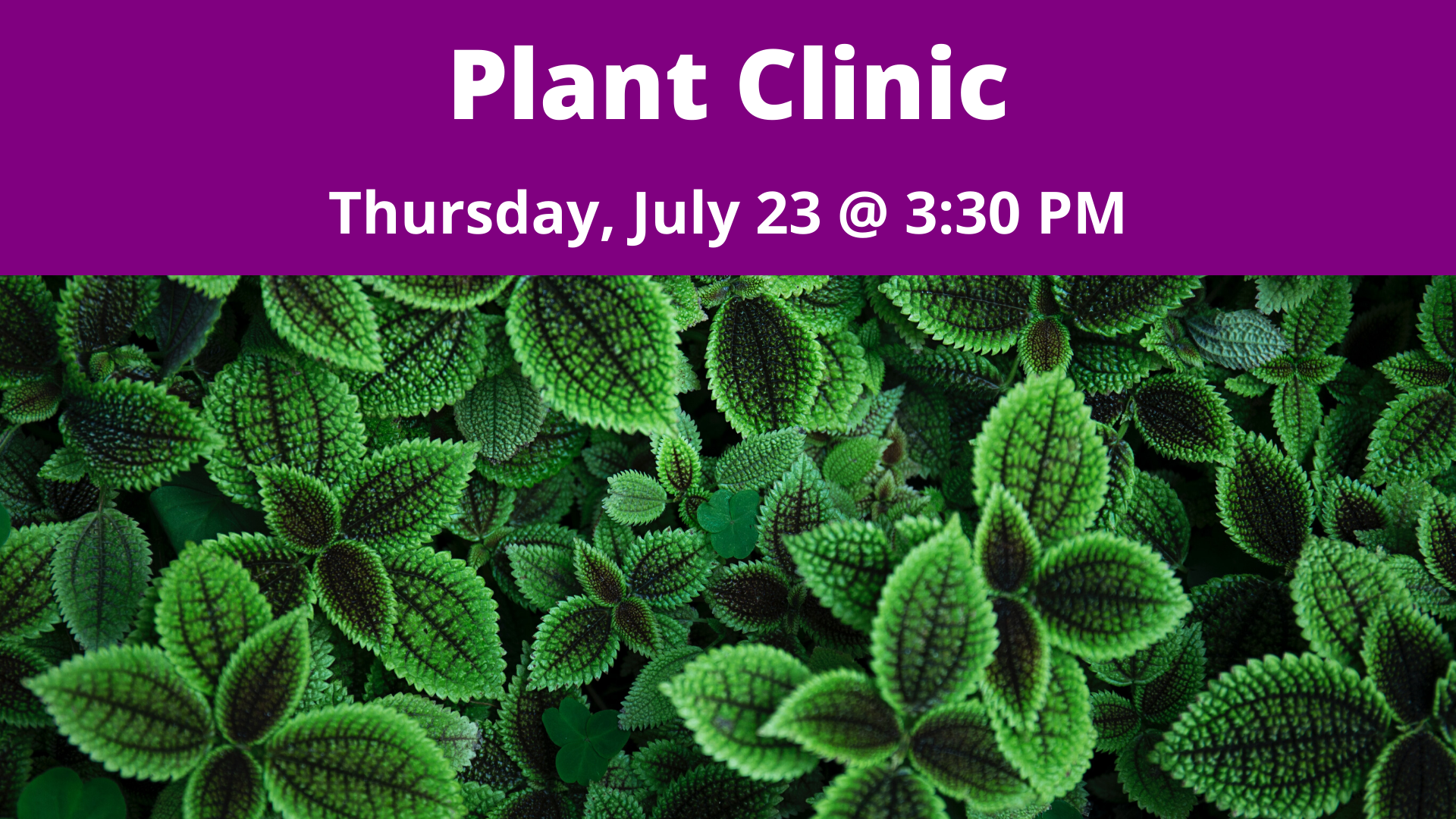Plant Clinic with Ginny Rosenkranz