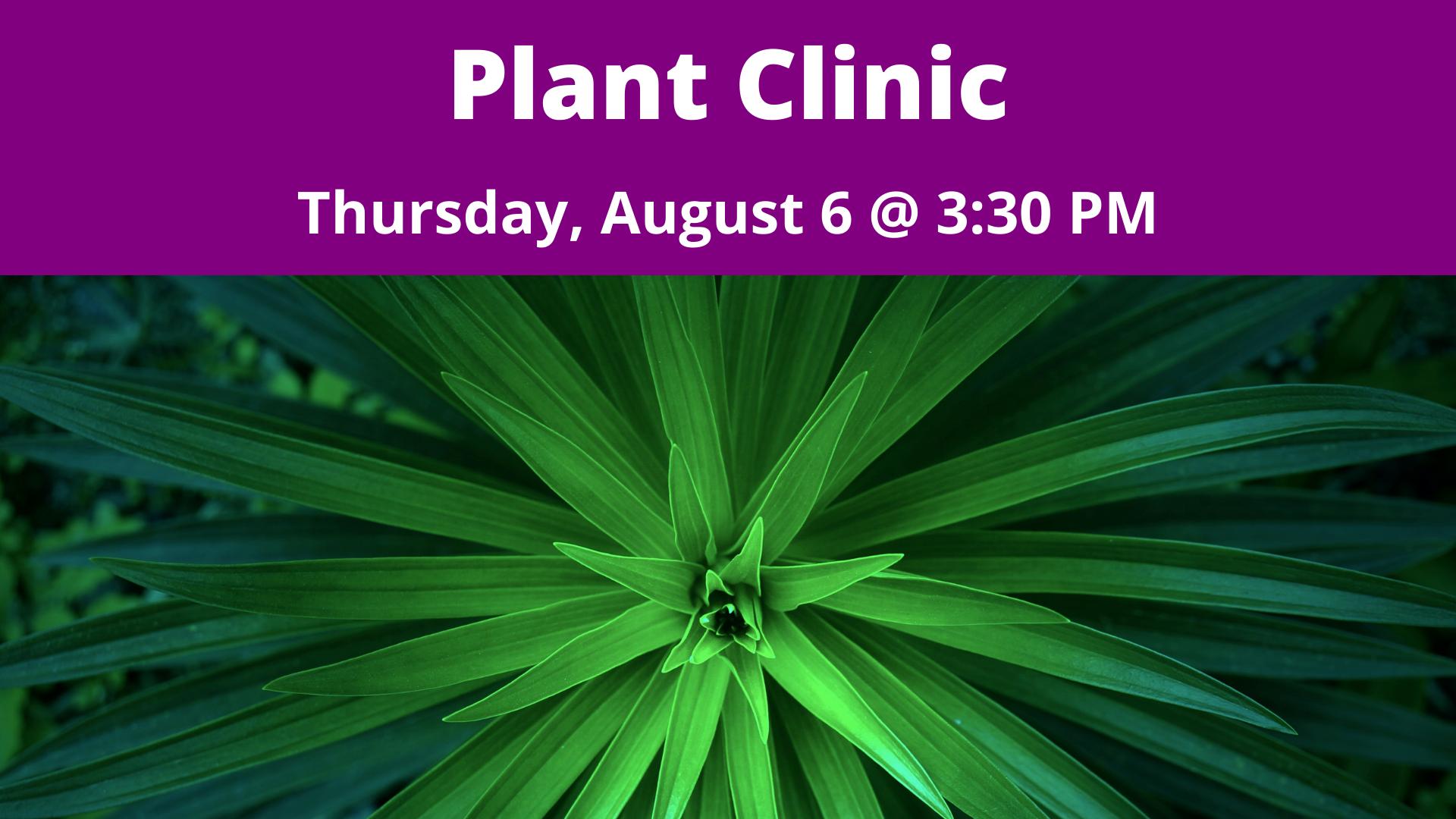 Plant Clinic with Ginny Rosenkranz